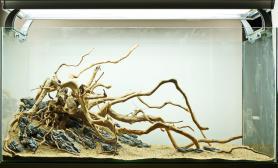造景骨架参考图杜鹃根沉木摆放案例