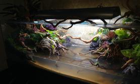 买1米缸水草缸送2米缸鱼缸水族箱附石景和水陆开缸图鱼缸水族箱