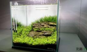 简约水草缸水草缸状态一级棒鱼缸水族箱
