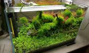 水草造景咣啷当 小缸修剪 定期修剪很重要