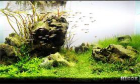 水族箱造景造景欣赏——《石韵》