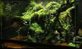 水族箱造景麝香~水龟生态缸~建缸两星期将就看