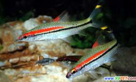 养好鱼保持水质清纯狠关键(图)