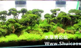 2015年上海国际水族用品展(部分造景)