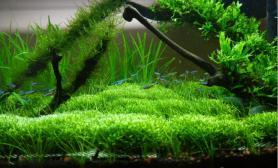 详细介绍水草缸适合养什么鱼