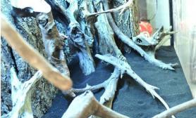 水草缸造景沉木水草泥化妆砂青龙石120CM尺寸设计31
