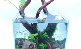 水草缸造景沉木水草泥化妆砂青龙石45CM及以下尺寸设计16