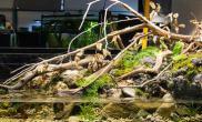 水族箱造景原生缸---亚马逊的问候