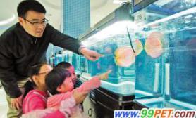 七彩神仙鱼和锦鲤大赛昨日在天津开锣(图)