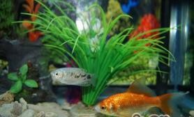 如何配置安全的鱼体消毒液