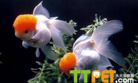 养殖海水观赏鱼的鱼缸保养方法