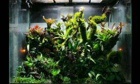 雨林生态缸~