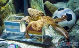 章鱼让阿根廷惊恐欲将保罗下锅泄愤(图)