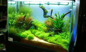 发几个漂亮的水草景