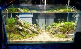 水草缸造景沉木水草泥化妆砂青龙石90CM尺寸设计61
