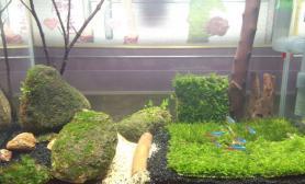 水草造景简单的水草缸