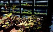 五九精品水族 台湾 Five & Nine Top Aquarium