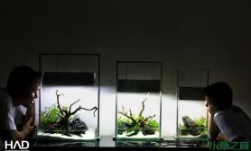 水族箱造景三个水陆缸