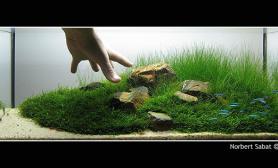 水草缸造景沉木水草泥化妆砂青龙石60CM尺寸设计28