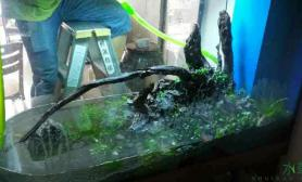 简单的水草水草缸沉木水草缸青龙石景开缸