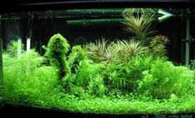 鱼缸造景春天到了水草缸一起来欣赏绿油油的水草吧