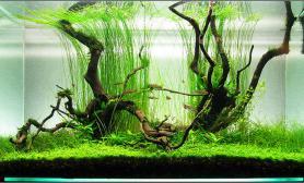 水草缸造景沉木水草泥化妆砂青龙石90CM尺寸设计87