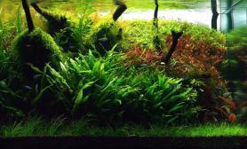水草缸造景沉木水草泥化妆砂青龙石60CM尺寸设计34