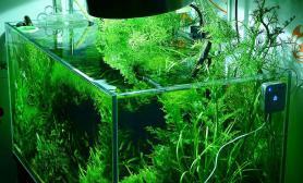 水草造景发个自己的90缸一堆草的草缸~