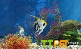 挑选鱼缸过滤器材方法