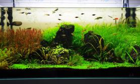 再传几张刚拍的水草缸90缸全景水草缸请轻拍~~~~~