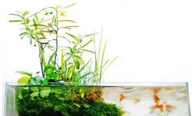水草造景对水族箱的要求(图)