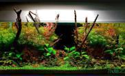 鱼缸造景哥们的水草缸水草缸真不错鱼缸水族箱
