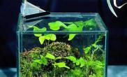 鱼缸要养成杀菌换水好习惯(图)