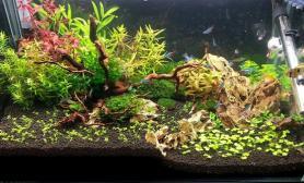 第一次在南美发帖水草缸水平一般水草缸TX们轻拍沉木杜鹃根青龙石水草泥