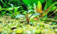 水草消毒方法总结新买水草如何消毒