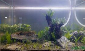 无CO2也能长这么快水草缸开缸2个月水草缸来个对比