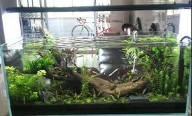 鱼缸造景开缸一个月水草缸
