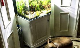 分享自己的一草缸水草缸一虾缸沉木杜鹃根青龙石水草泥