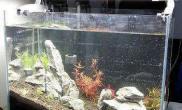 水草造景发发办公室45小缸处女照鱼缸水族箱