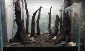 分享几个最近做的青龙石骨架和雨林骨架