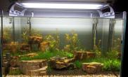 水草造景开缸20天水草缸做了个小手术鱼缸水族箱