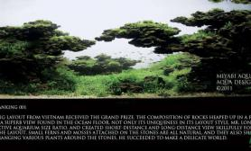 水草造景2011世界水草造景大赛20强作品巨献