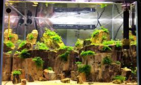 2米草缸开缸记录水草缸(多图慎入) 水族箱