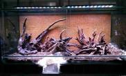 两米雨林缸的建成水草缸多图水草缸慎入鱼缸水族箱