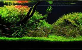 水草缸造景沉木水草泥化妆砂青龙石120CM尺寸设计81
