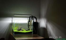 与草友分享我的第一个小缸30X18,lED养草也好用呀沉木杜鹃根青龙石水草泥呵呵沉木杜鹃根青龙石水草泥