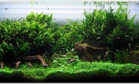 水草造景小小炫耀一下水草缸