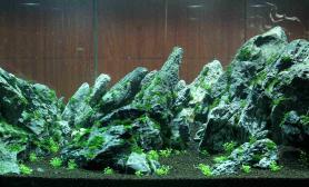 新开的120青龙石缸原创水草造景鉴赏