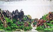 造景之路:水草造景(90CM)