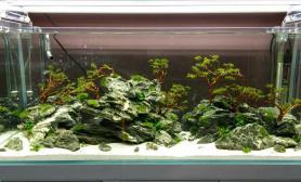 雨林生态水草缸多风格造景简单哥作品集合
